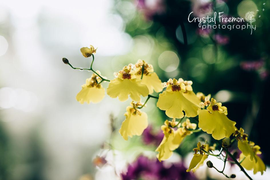 Georgia Botanical Garden